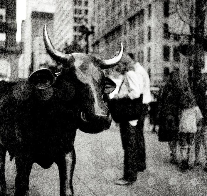 270 Bull